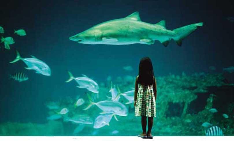 L'acquario di Anna, una storia come tante